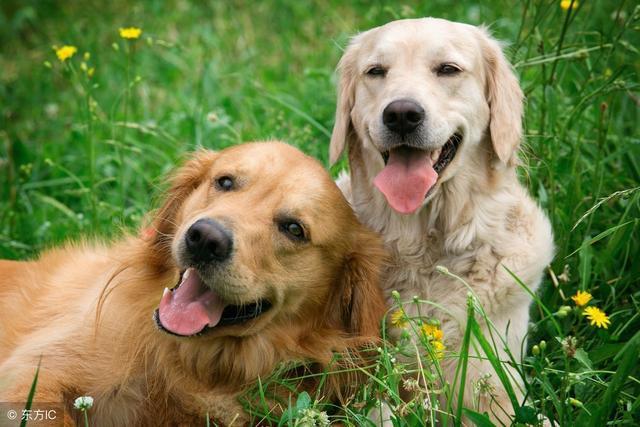 狗狗跟人年龄的换算,你家毛孩几岁呢? (图3)