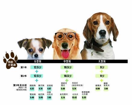 狗狗跟人年龄的换算,你家毛孩几岁呢? (图2)