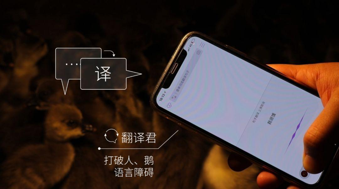 """腾讯宣布正式养鹅:正在研发""""鹅脸识别""""的照片 - 5"""