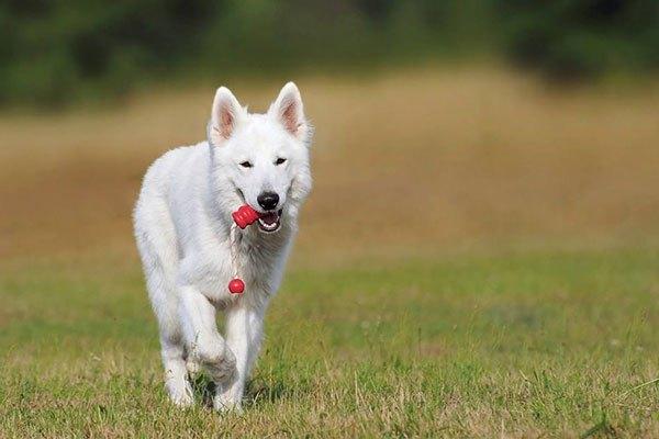 什麼樣的性格決定養什麼狗種