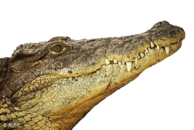 甲骨文也将要推出区块链产品,真正的大鳄来了