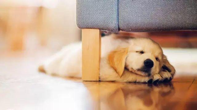 狗狗绝育手术,必看的7条注意事项