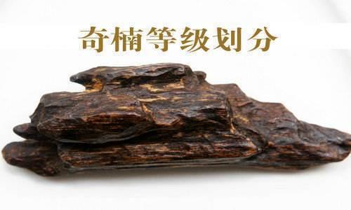 刘之强:为了解决沉香鱼龙混杂的问题,我们将建设万亩沉香园-中国记录