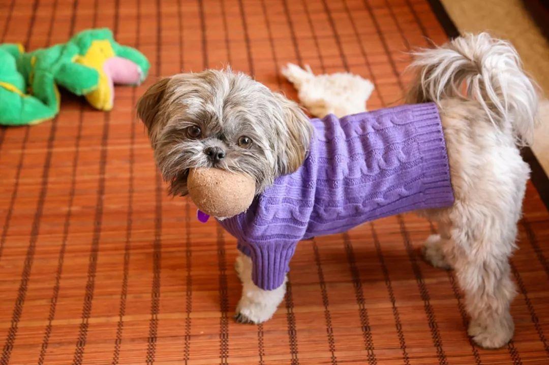 10种狗狗讨厌的行为!你有对狗狗做过吗?