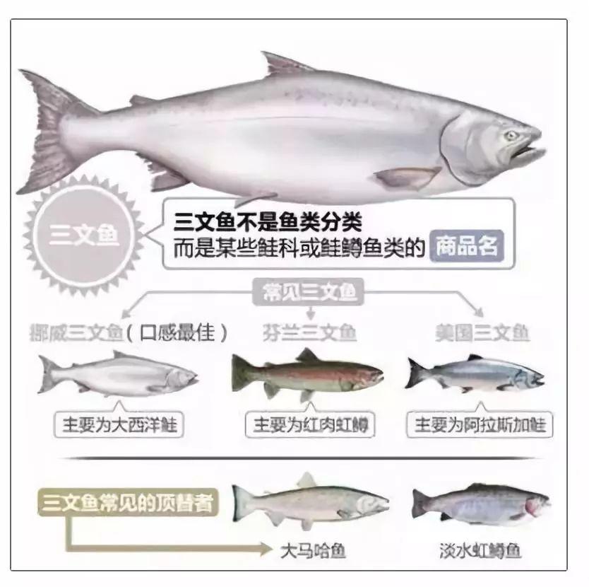 你吃的是三文鱼,还是寄生虫?看完吓出一身冷汗……的照片 - 17