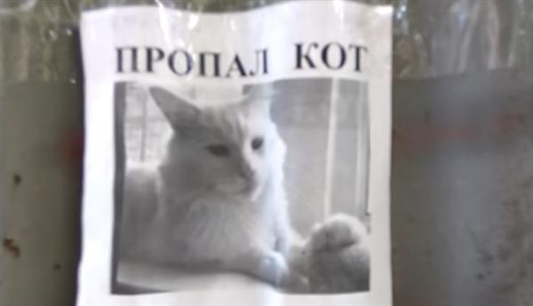 这张自带视觉欺骗的寻猫启事火了:喵星人总是盯着你的照片 - 3