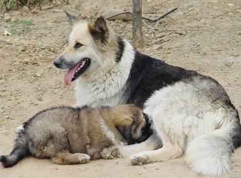 18个关于狗狗治愈人心的小故事,最后一个竟然看哭了!