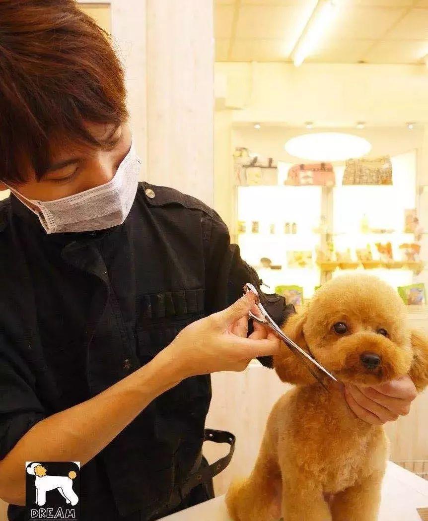 你相信吗?一家宠物店仅靠宠物美容服务就能月入8万