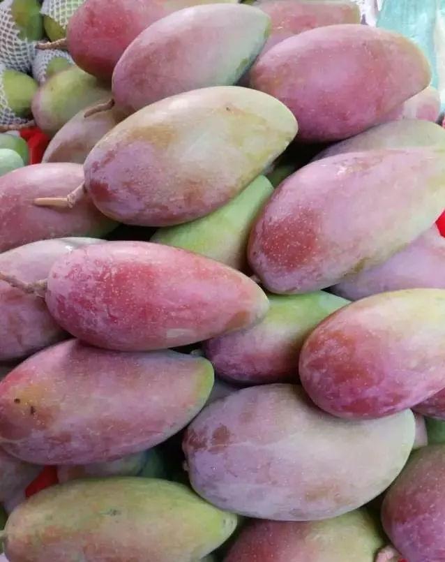 攀枝花芒果网:攀枝花本地芒果品种介绍