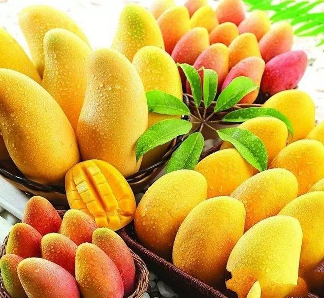 攀枝花芒果网:夏天的攀枝花是芒果味的