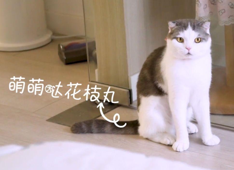 "MollyGirl   ""我以为我这辈子,不会再养猫了。"""