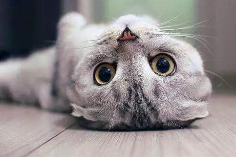 哪种类型猫砂最受青睐?
