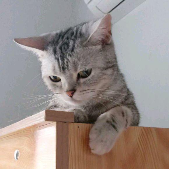 """猫奴的哭诉:有时候,真的想""""打死""""家中的主子!"""