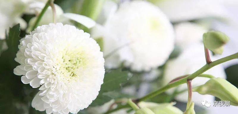 说说葬礼:日本的火葬率接近100%