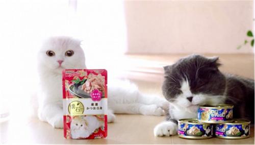 人不如猫!猫罐头都有怀石料理了?