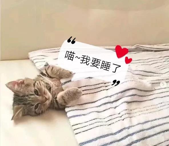 靠睡觉一路爆红的猫主子,它的睡姿到底有啥魔力?