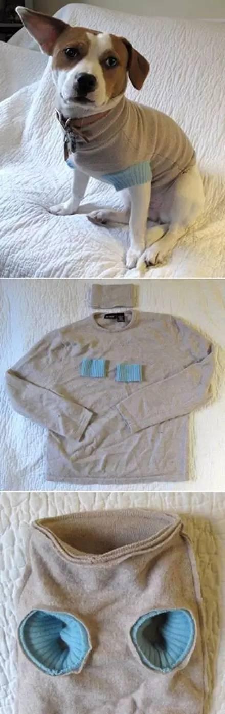 利用丢弃的衣服,给狗狗做一件独一无二的衣服!