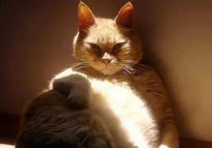 """""""到底养猫还是养狗好?""""看完笑喷!"""