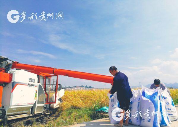 惠水县:稻菽千重浪 处处乐丰收