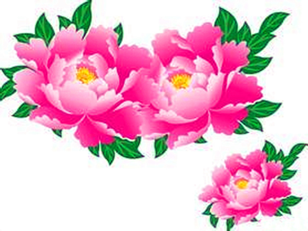 美图 30种牡丹花开了,吉祥如意,富贵临门!