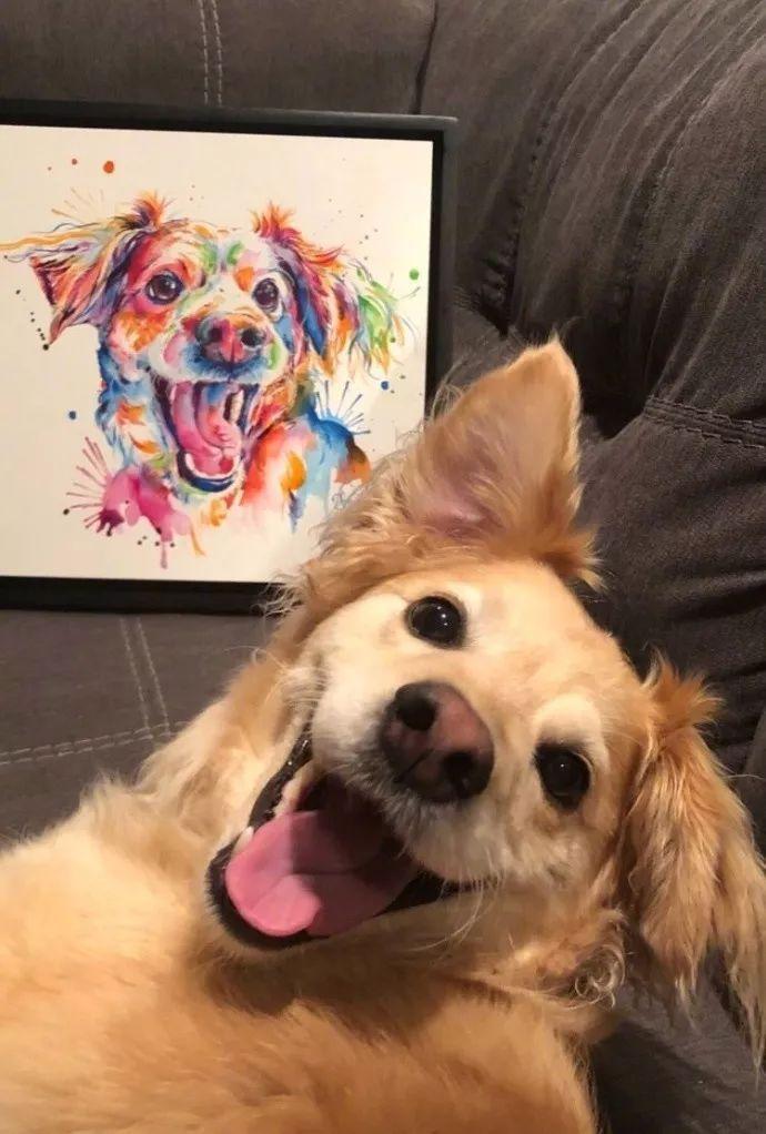 世界上最深厚的感情,排在第一位的竟是狗狗对主人?