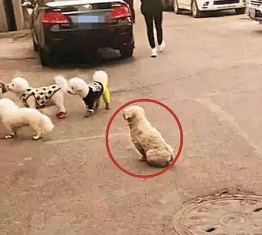 为了生存,流浪狗都学会了哪些技能?