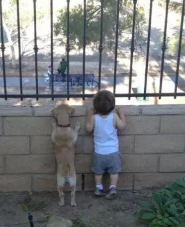 狗和孩子相处的画面,这大概就是天使遇上天使吧