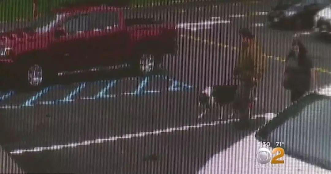 """主人假装带狗狗去森林散步,却狠心对它连开6枪,""""不想养了"""""""
