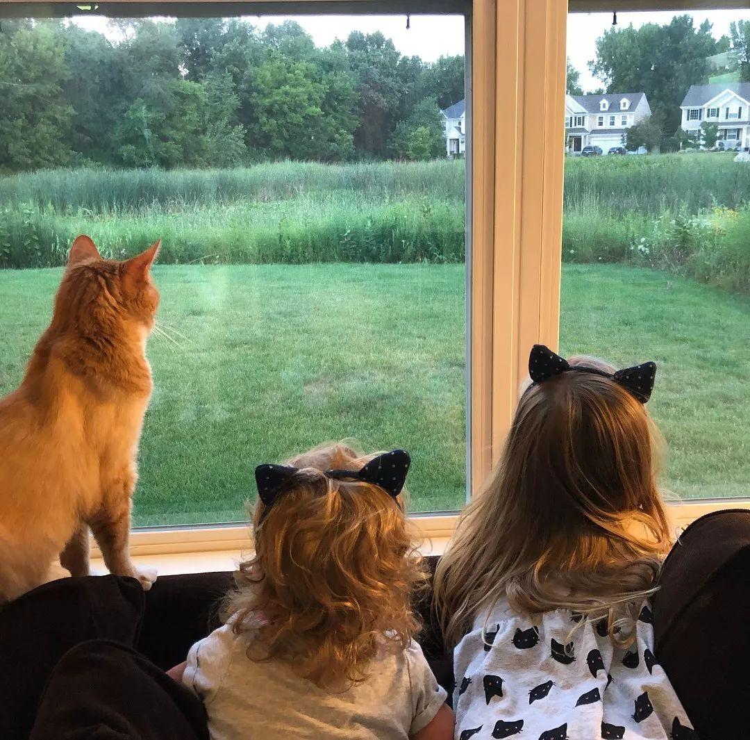 美国一流浪橘猫被女大学生收养后,报恩13年