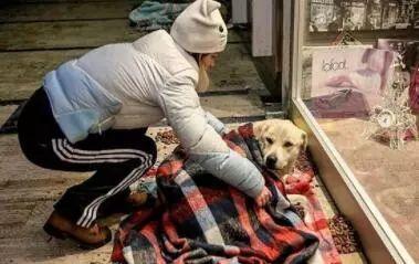 快递员在上班时遇到一只流浪狗,送到医院,留下500元离去