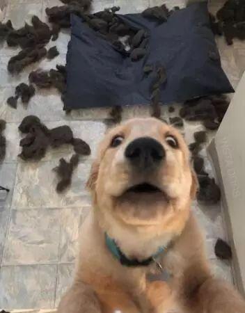 狗会觉得尴尬吗?