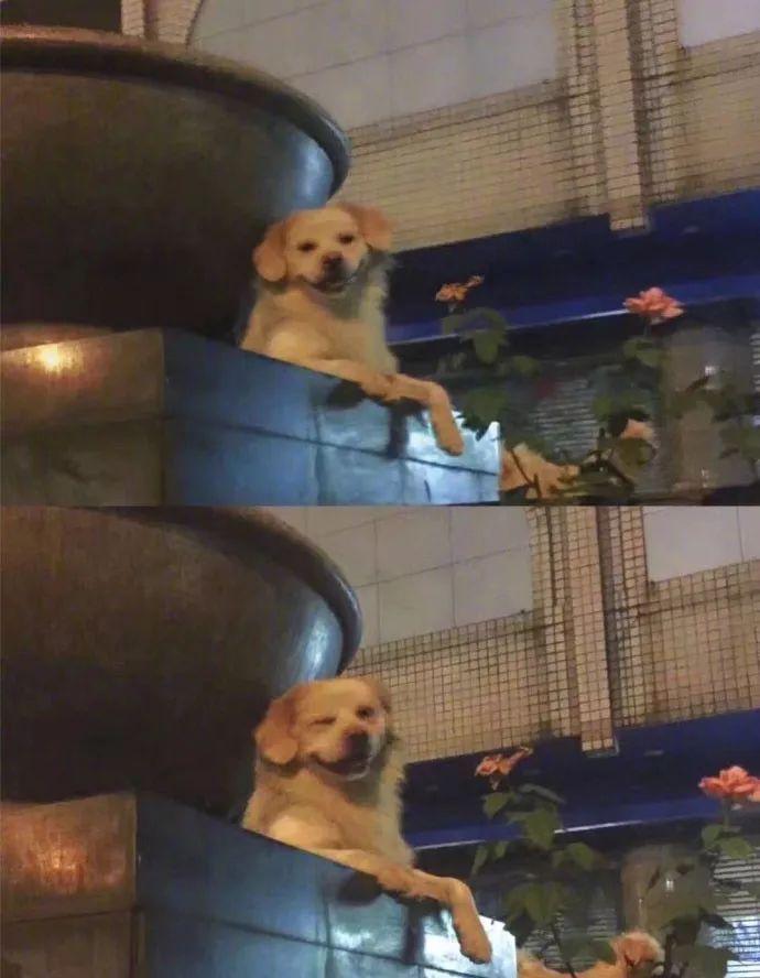 你有没有被一只狗帅到过?