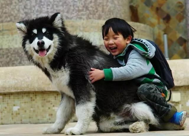 担心狗狗误伤人,做好了这五点,它们也可以待人友善大方!