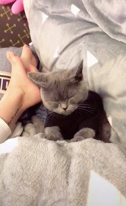 蓝猫一边打瞌睡,还要一边给主人按摩