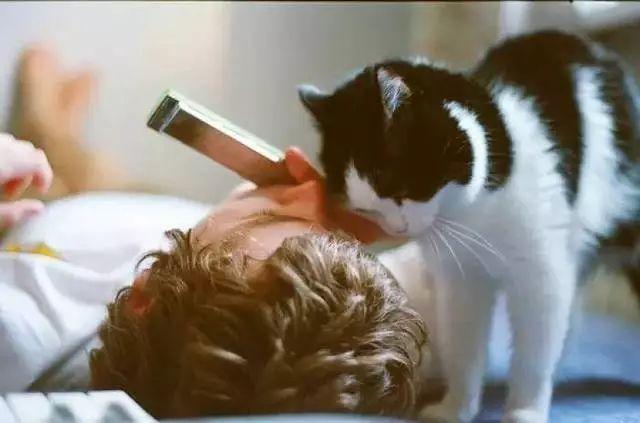 没女朋友的单身狗,可以考虑养一只猫咪
