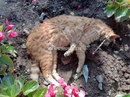 北京一小区多只猫咪遭鱼镖射杀,知情人:镖带倒钩,非常残忍