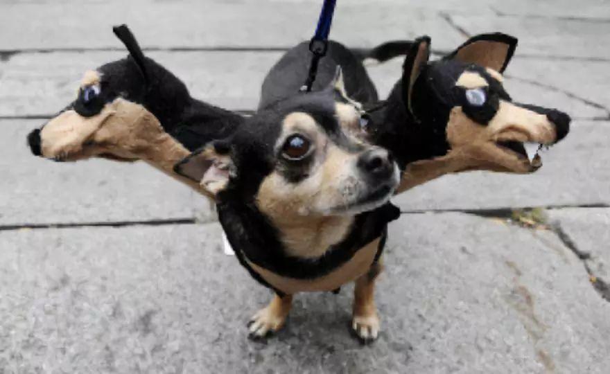 每年的万圣节前夜,国外网友就喜欢po出狗狗的万圣节装扮