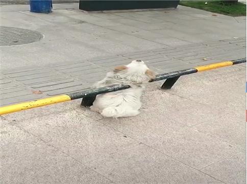以为流浪狗被卡住了,打算上去帮忙,跑过去看到了这幕