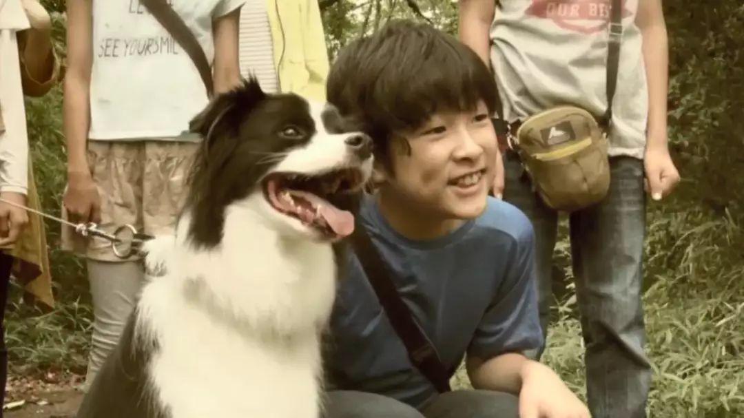 孩子们登山时被胡峰群袭击,危急时刻一只狗狗冲了过去!