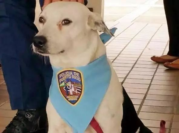 流浪狗闯进警察局,却被收编成警犬,逆袭成警界英雄