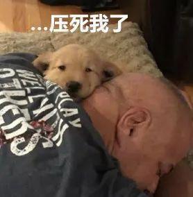 爸爸经历了长达四年的委屈巴巴后,妈妈终于同意他养狗了
