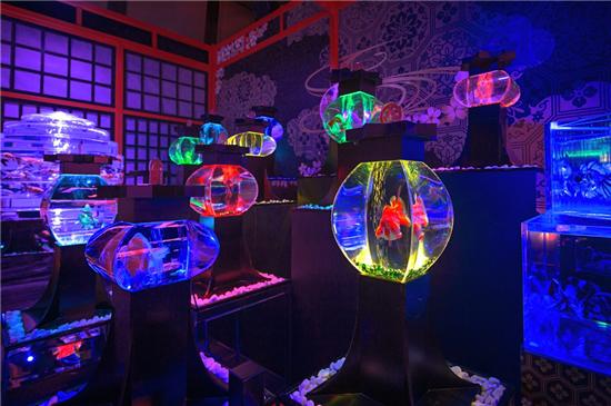 惊艳开幕!5000多条金鱼凌空起舞,轰动千万人的艺术金鱼展来上海啦