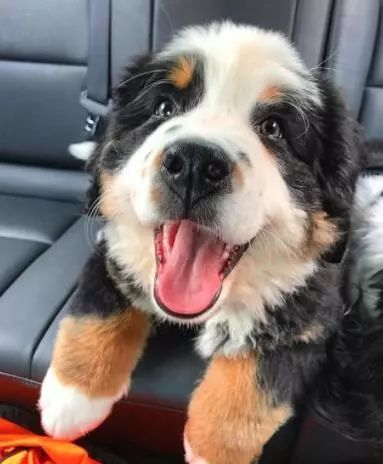 当狗狗笑起来的时候……这是什么绝世小可爱呀!