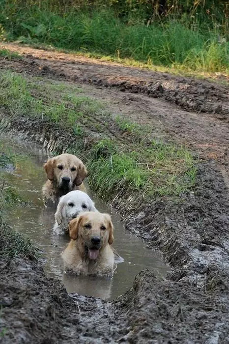这些狗子让人不省心,洗白白了还是可爱汪一枚