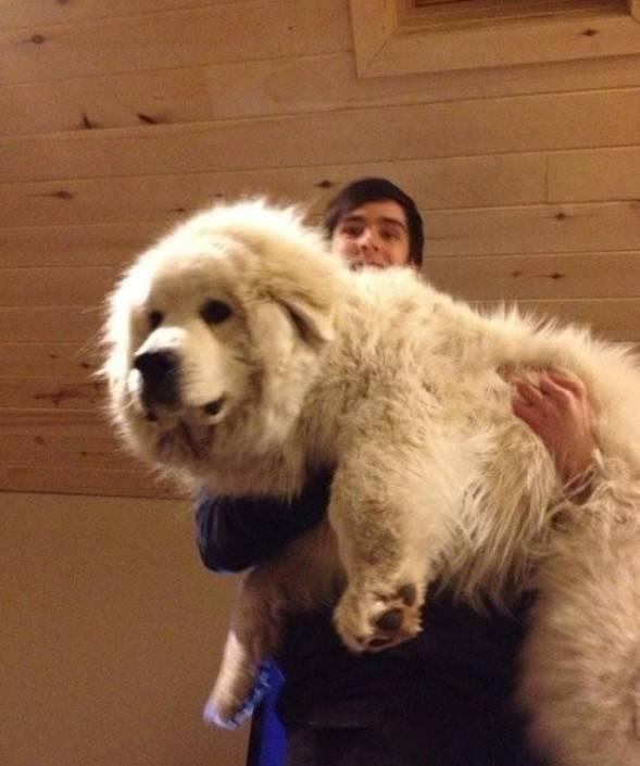我为什么养大狗?——因为暖啊!