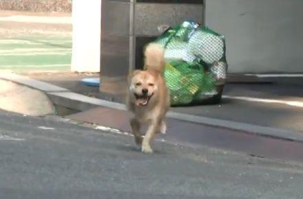 """韩国一小区中最八卦的狗,整天四处卖""""笑"""",而这一切竟是为了..."""