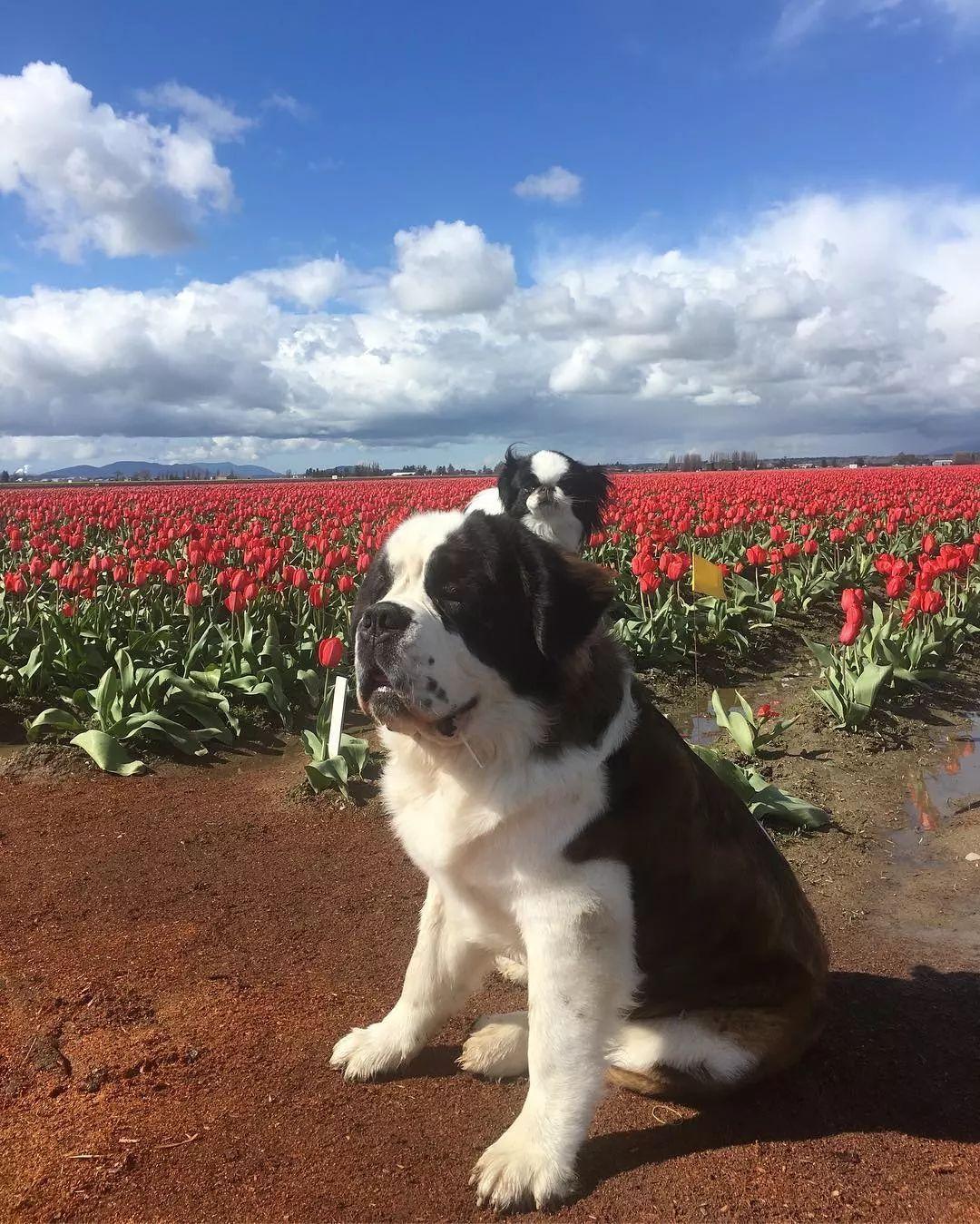 两只狗狗过着很多人梦寐以求的生活,看最美的风景