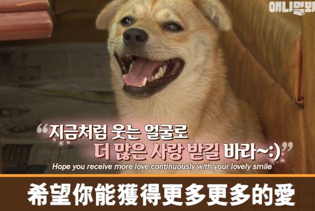 流浪狗Bokdol四处奔走讨零食,背后的故事让人泪目