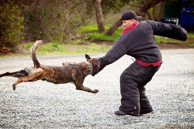 8岁女童遭狗撕咬头皮见骨,医生:其实一招就能让狗松口!