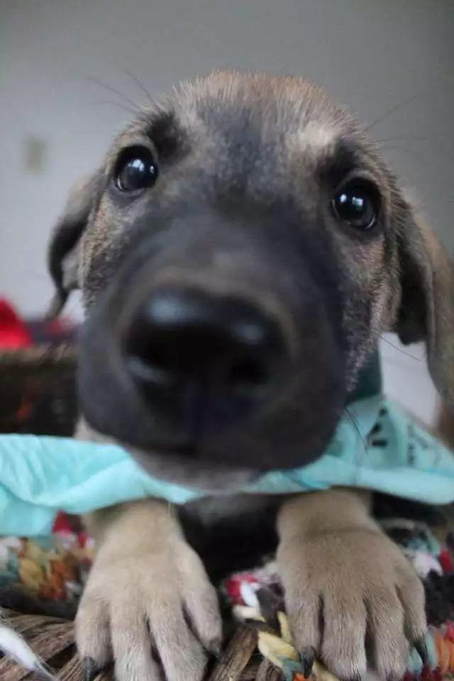 救下了一只怀孕的母狗,两个月后,收获了一堆小天使!